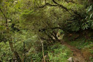Cirque de Mafate :: Sentier Scout final turns before reaching the ridge with Route Forestiere du Mafate