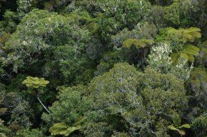 Forêt de Bélouve :: by Gîte de Bélouve :: the forest on the slopes above Hell Bourg