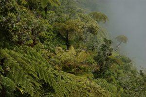 Forêt de Bélouve :: Trou de Fer :: the slopes