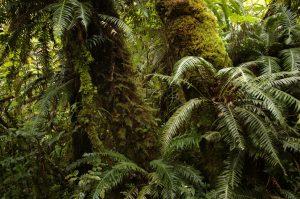 Forêt de Bélouve :: Sentier de l'École Normale