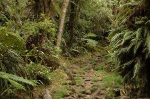 Forêt de Bélouve :: Sentier de l'École Normale :: by Grande Mare