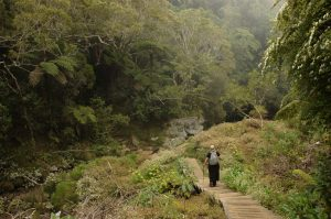 Forêt de Bélouve :: Sentier du Trou de Fer