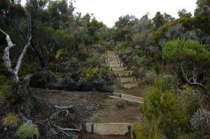 Forêt de Bébour :: a newly build trail by Cap Anglais