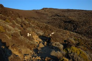 Piton des Neiges :: following the rocky trail