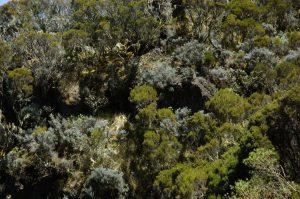 Cirque de Cilaos :: the caldera edge :: the forest