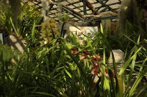 les Colimaçons :: the botanic garden site :: some orchids