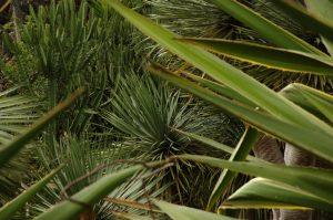 les Colimaçons :: the botanic garden site :: succulents