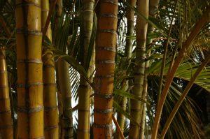 slideshow image les Colimaçons :: the botanic garden site :: palms