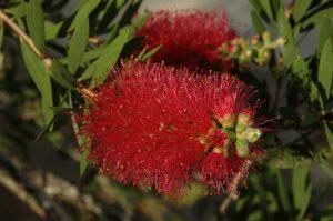 les Colimaçons :: the botanic garden site :: a flower