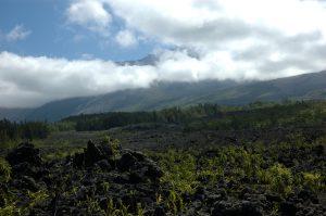 Sud Sauvage :: Grand Brûlé :: Vierge au Parasol :: looking up to le Volcan