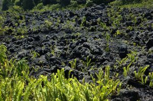 Sud Sauvage :: Grand Brûlé :: the first plants