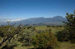 le Volcan :: pastures above Plaine des Cafres :: le Grand Bénare, Piton des Neiges