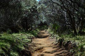 le Volcan :: the trail along the Rempart de Bellecombe towards Piton de Partage