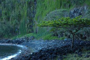 East Coast :: Pointe des Cascades :: the ocean coast