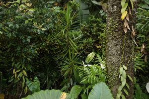 """Sud Sauvage :: Tremblet :: a """"wild"""" vanilla garden"""