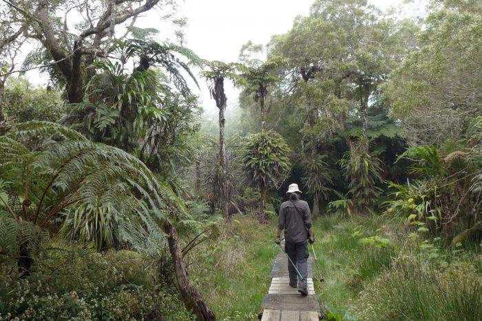 Forêt de Bélouve, La Réunion, October 2016