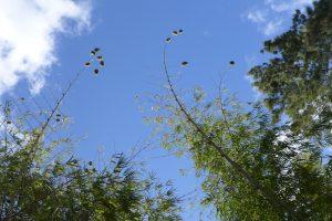 Cirque de Mafate :: Îlet à Malheur :: the high nests