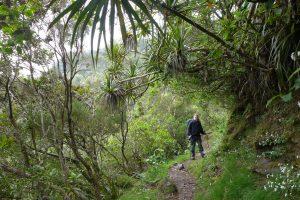 Cirque de Mafate :: Sentier Scout :: the road at the ridge to the Cirque de Salazie must be near...
