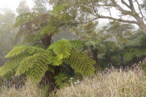 Forêt de Bélouve :: by Gîte de Bélouve :: the rain forest edge