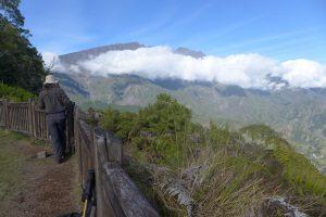Forêt de Bélouve :: Belvedere view point :: Piton des Neiges ridge