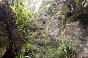 Forêt de Bébour :: a well-trodden trail