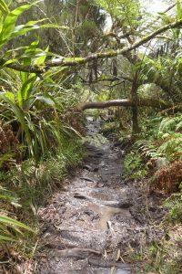 Forêt de Bébour :: mud, mud, mud...