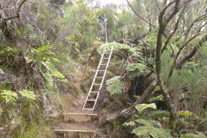 Forêt de Bébour :: the ladders in the muddy slopes
