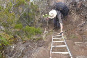 Forêt de Bébour :: by Cap Anglais :: one of the last ladders