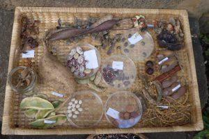les Colimaçons :: the botanic garden site :: seeds