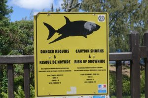Sud Sauvage :: Cap Méchant :: just another sharks warning
