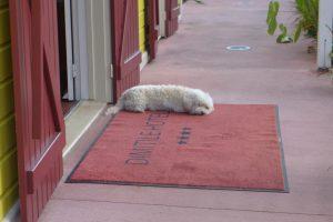 L'Entre Deux :: (White) Vanille, the hotel dog