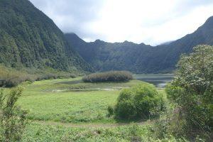 East Coast :: Grand Etang :: the half-dried lake