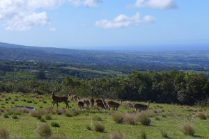 East Coast :: by St. Anne :: Diana Dea :: the deers of the hunting reserve